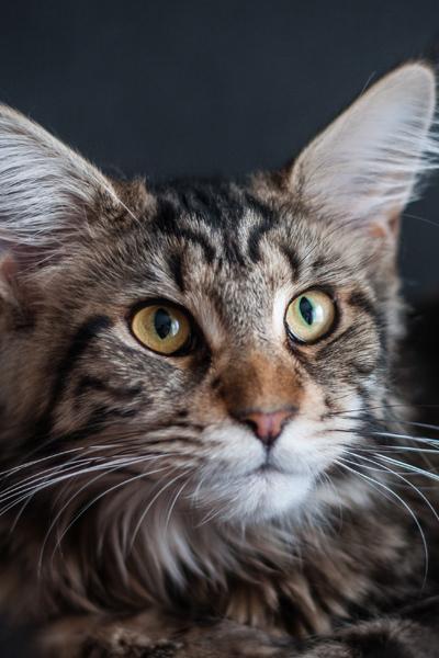 Seaway pet insurance cat